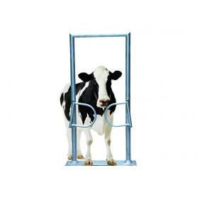 Eenrichtings poort voor rundvee